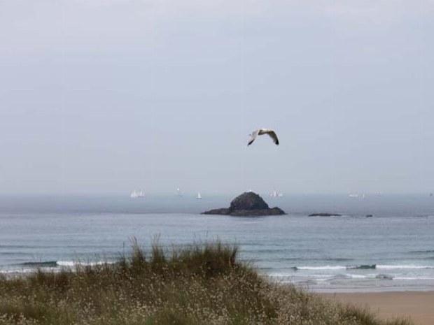 Eine Möwe fliegt über den Strand in der Bretagne.